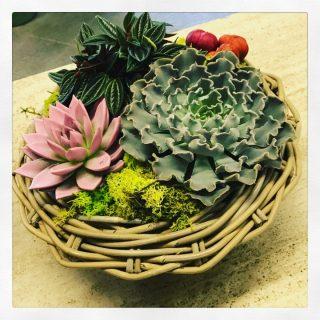 Centrotavola con piante