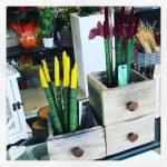 La pianta di oggi la gardenia - Gardenia pianta da interno o esterno ...