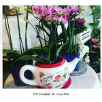 Orchidee in cucina