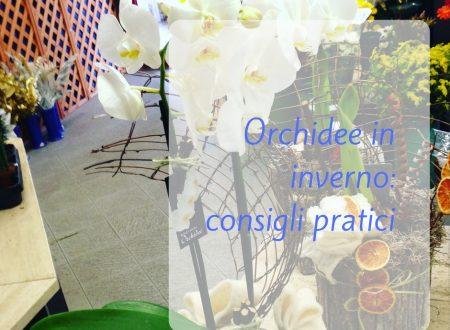 Orchidee in inverno: consigli pratici
