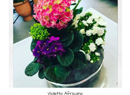 Idee fiorite for Violetta africana