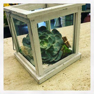 succulenta in teca di vetro