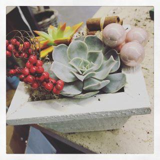 composizione natalizia con piante grasse