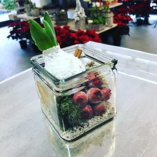bulbo di giacinto in confezione natalizia