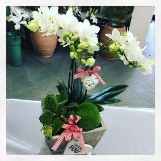 orchidea per la Mamma