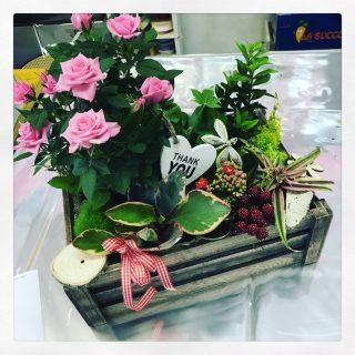 composizione di piante per la Festa della Mamma