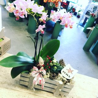 orchidea regalo Natale